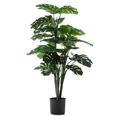 Home Republic Potted Monsteria, potted plants, faux plants Faux Plants, Potted Plants, Indoor Plants, Adair Homes, Home Republic, Lush Green, Throw Rugs, Home Decor Accessories, Plant Leaves