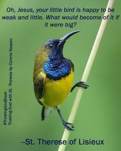 The Olive-backed Sunbird (Cinnyris jugularis), also known as the Yellow-bellied Sunbird, is a species of sunbird found from Southern Asia to Australia. Pretty Birds, Love Birds, Beautiful Birds, Small Birds, Colorful Birds, Australian Birds, Exotic Birds, Bird Species, Bird Watching