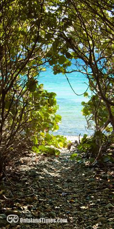 Good things come to those that HIKE! Haulover North is a short hike to some of the best snorkeling on St John, US Virgin Islands! More info ... http://onislandtimes.com/st-johns-top-snorkeling-spots-spotlight-on-haulover-bay/