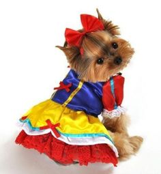Enchanted Snow Princess Halloween Dog Costume - Halloween Dog Outfits