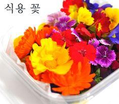 모듬허브 꽃(식용꽃) : 꽃피는 아침마을 [A7]