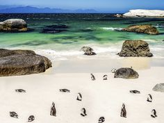 From penguins to people watching, Cape Town has a beach for that.