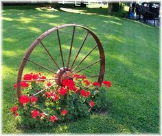 Wagon wheel with Geraniums, so pretty.