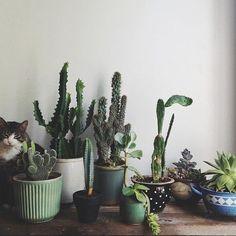 cacti + a hidden kitty