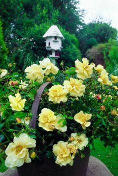 49 Best Flower Carpet Roses Mixed Varieties Images Beautiful