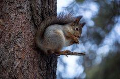 Squirrel, cute animal, tree trunk wallpaper