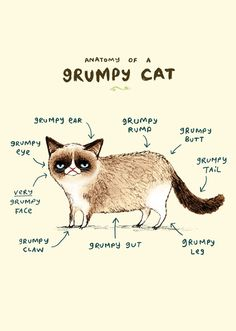 Anatomy of a Grumpy Kitty