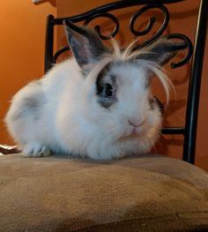 #bunnies #rabbits #pets #cuteanimals #awww
