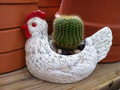 Chicken planter luv