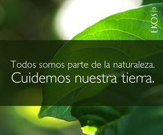 Blog Natura Chile » Día del Medioambiente: siembra el cambio.