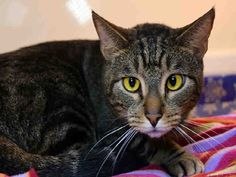 Papi is a very calm, friendly cat. He gets along with everyone... and other cats!
