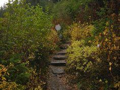Trail to Bench Lake, Mt Rainier National Park