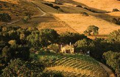 Holman Ranch Vineyards, Carmel Valley Village, California. www.allabouttravel.org www.facebook.com/AllAboutTravelInc 605-339-8911 #travel