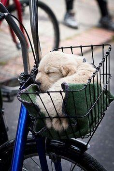 Bici paseoo y amigo perrunoo...linda combinacion! :)