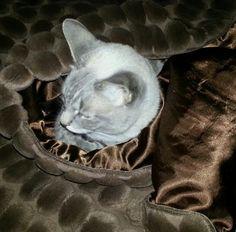 Swaddled kitty