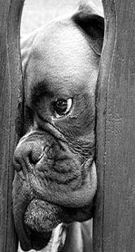 """I seeee you.""  (boxer)"