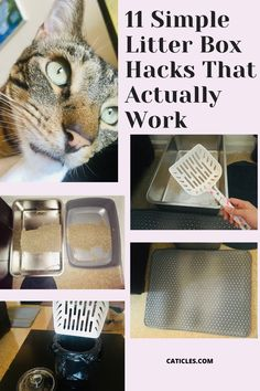 Want to keep the litter box area clean? Check out my litter box hacks! I've scooped hundreds of boxes as a cat care provider. I've perfected my litter box cleaning routine and spend about 10 minutes a week cleaning! Cats prefer and deserve a clean litter box. But unfortunately many people overlook the importance of a clean litter box. A clean litter box can help prevent health and behavior issues. Check out the sanitary litter box supplies and how I keep the litter area clean Check it out today! Litter Box Smell, Diy Litter Box, Best Litter Box, Cat Liter, Living With Cats, Cat Hacks, Cat Urine, Cat Care Tips, Pet Furniture