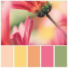 Hooked on color palettes (spring florals) color combos цвета Spring Color Palette, Colour Pallette, Color Palate, Spring Colors, Colour Schemes, Color Combos, Color Patterns, Bright Spring, Pantone