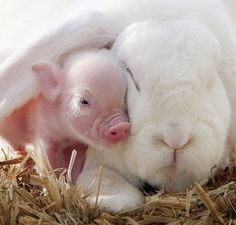 Bunny And Piglet