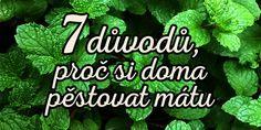 Healing Herbs, Aloe, Mojito, Herbalism, Pesto, Health Fitness, Herbal Medicine, Medicinal Plants, Fitness