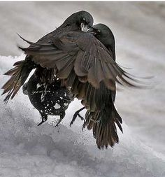 """LOVE LOVE LOVE these """"Dancing Crows""""!! by.......?????"""