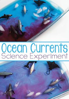 10 insanely easy ocean science experiments science experiments ocean science experiments sciox Images