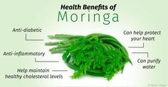 "Moringa: Natural Cure To Fight Diabetes And Cancer. The moringa plant grows mainly in South Asia and its part of the traditional medicine for very long time. You may know this powerful antioxidant under the name ""drumstick"". Science has proved and accepte Moringa Leaves, Miracle Tree, Healthy Cholesterol Levels, Healing Herbs, Natural Home Remedies, Health Benefits, Health Tips, Moringa Oleifera, Immune System"