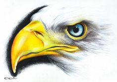 Bird Drawings, Colorful Drawings, Animal Drawings, Pencil Drawings, Cool Sketches, Drawing Sketches, Watercolor Bird, Watercolor Paintings, Polychromos