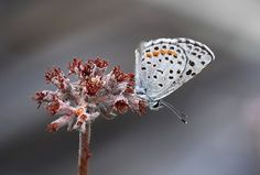 In this post, Steve Berardi from PhotoNaturalist discusses eight tips for photographing butterflies. Butterflies are pretty sensitive little creatures. Get too close, and they'll fly away in a hurry. And, even when you do get close, they're constantly moving from flower to flower, gathering their most precious prize: sweet nectar. All this makes it difficult …