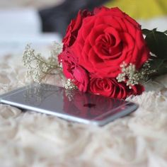 Don't force anyone 2 stay, if they meant to be. They'll never leave you alone. Flowers Dp, Book Flowers, Cute Wallpaper For Phone, Rose Wallpaper, Original Wallpaper, Stylish Girl Images, Stylish Girl Pic, Girly Pictures, Flower Pictures