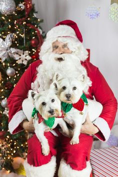 Duke, Jake, and Santa! Love these pups and their adorable Christmas collars! Pet Pictures with Santa are the best!