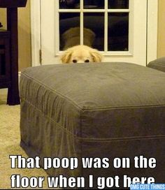 {Definitely something Emma would say…if she could talk} Animal Memes | OMG Cute Things