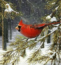 everyday a different color, beautiful gifs, soft goth, nature. images that I like and attract my attention. I hope you'll find images here for your taste too. HAVE FUN ! Pretty Birds, Love Birds, Beautiful Birds, Christmas Scenes, Christmas Art, Vintage Christmas, Illustration Noel, Cardinal Birds, Bird Pictures