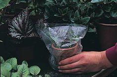 69795-2 Container Herb Garden, Container Gardening Vegetables, Veg Garden, Easy Garden, Garden Ideas, Garden Art, Garden Plants, How To Propagate Lavender, Essential Oil Carrier Oils