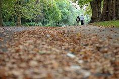 Неколико шетња кроз јесен оставља у северном Лондону парк