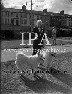 Miss L Rogers, Auburn Villa, Tivoli Rd., Dun Laoghaire with her two Samoyeds at Bray Dog Samoyed, Dog Show, Photo Archive, Auburn, 1950s, Ireland, Villa, Gallery, Dogs