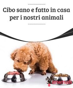 Cibo sano e fatto in casa per i nostri animali Stop a pappe e croccantini già pronte: facciamo spazio al cibo sano e fatto in casa per i nostri animali che, come noi, meritano un'alimentazione corretta. Food Icons, Proper Nutrition, Akita, My Animal, Baby Food Recipes, Animals And Pets, Dog Lovers, Dog Cat, Food And Drink