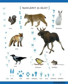 Winter animals from Finland Early Education, Early Childhood Education, Science Education, Finnish Language, Teaching Aids, Montessori Materials, Forest Animals, Science And Nature, Pre School