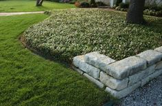 Low-maintenance, drought-friendly landscapes call for groundcovers ...