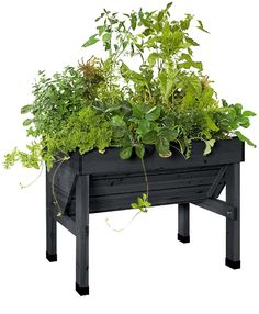 Compact Veg Trug Grow plants at an easy working height in this unique patio garden; no bending or kneeling to plant, tend and harvest. The compact size is ideal for smaller spaces and the elevated bed means no weeds and fewer pests too. The V-shape makes Elevated Garden Beds, Elevated Bed, Raised Garden Beds, Raised Beds, Raised Gardens, Small Garden Patios, Small Patio, Outdoor Planters, Garden Planters