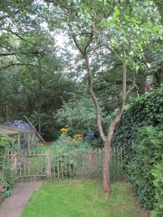 Een pruimenboom snoeien - Groene Passies Gardening Tips, Min, Camper, Landscapes, Pictures, Paisajes, Truck Camper, Camper Van, Campers