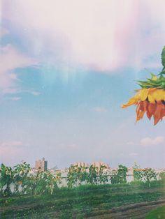 Brooklyn Grange: A Rooftop Urban Farm | Free People Blog #freepeople