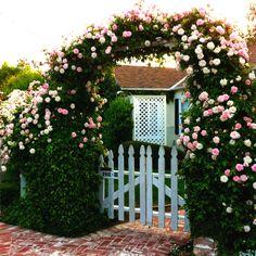 romantic rose archway
