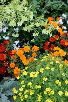 4 helppoa tapaa varmistaa kesäkukkien jatkuva loisto - 4 Easy Ways to Keep your Annuals Blooming Text Outi Tynys, photos A-lehtien kuva-arkisto www.viherpiha.fi