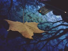 A leaf. But it was a fun leaf. West Coast, All Things, Landscape, Fun, Landscaping, Lol, Funny