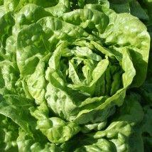 LE BIAU GERME : Semences biologiques potagères, florales et aromatiques