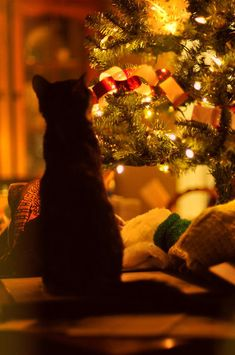 Christmas Kitty Yeah this is what it should be like. but the cat is normally IN the tree. Christmas Abbott, Merry Christmas, Christmas Mood, Christmas Lights, Vintage Christmas, Christmas Snowflakes, Family Christmas, Christmas Ornaments, Christmas Animals