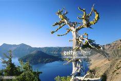 Alpine Tree Snag