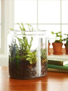 How To Create a Terrarium Terrariums are a beautiful addition to desks, dining room tables, or other well-lit spots. Check out our easy step-by-step instructions on how to plant a terrarium. Better Homes And Gardens, How To Make Terrariums, Terrarium Diy, Terrarium Centerpiece, Small Terrarium, Glass Terrarium, Garden Plants, Indoor Plants, Terrace Garden