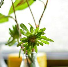 Blume grün